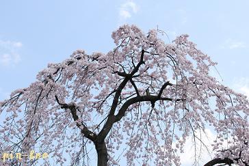 3.27京都3