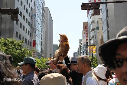 5.16神戸まつり6
