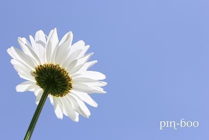 6.5花と空