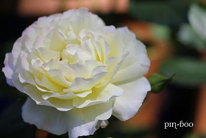 6.5高原の花17