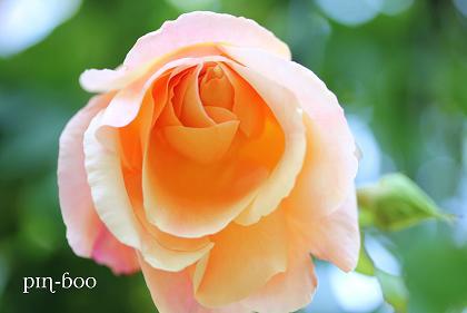 6.5高原の花20