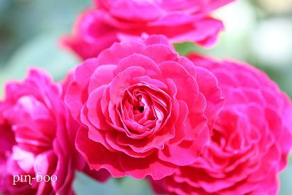 6.5高原の花21
