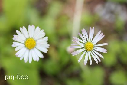 6.5高原の花1