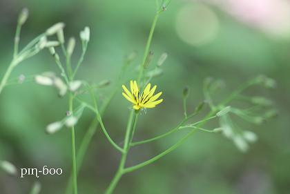 6.5高原の花14