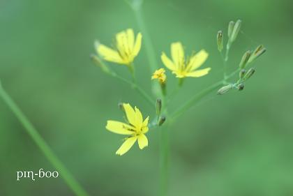 6.5高原の花24