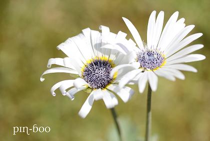 6.5高原の花5