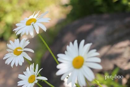 6.5高原の花22