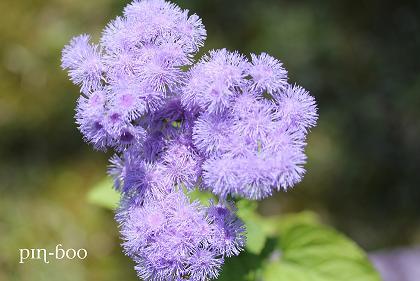6.5高原の花6