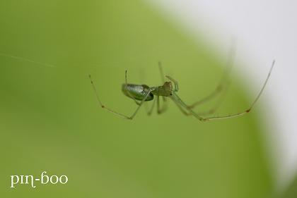 6.21蜘蛛
