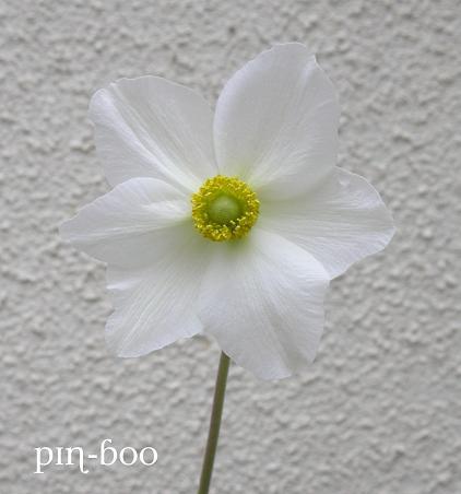 7.11白い花
