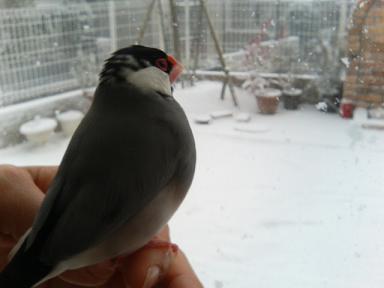 ぶたこ雪1