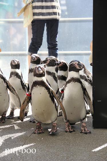 9.12ペンギン1