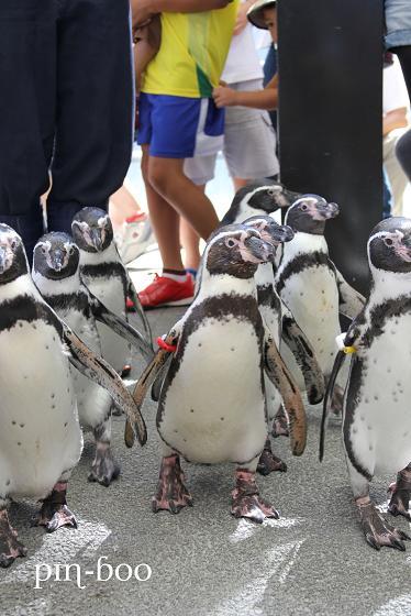9.12ペンギン2