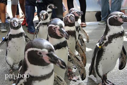 9.12ペンギン3
