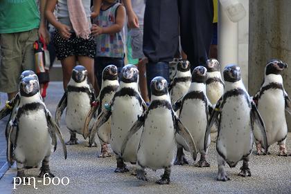 9.12ペンギン4