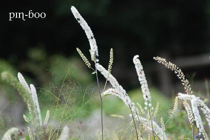 10.4花畑1