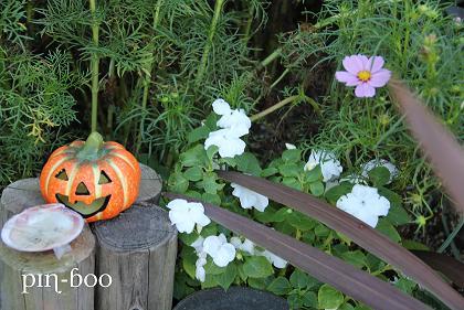 10.8かぼちゃ