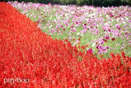 10.26花畑
