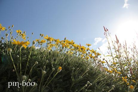10.31花