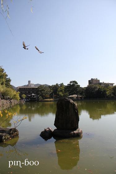 11.16猿沢の池