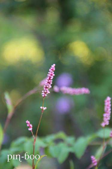 12.14花