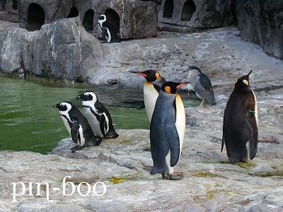 1.19ペンギン1
