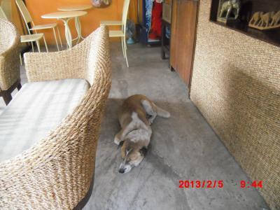 Doi Chaan犬