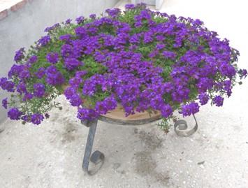 bloemen 2012