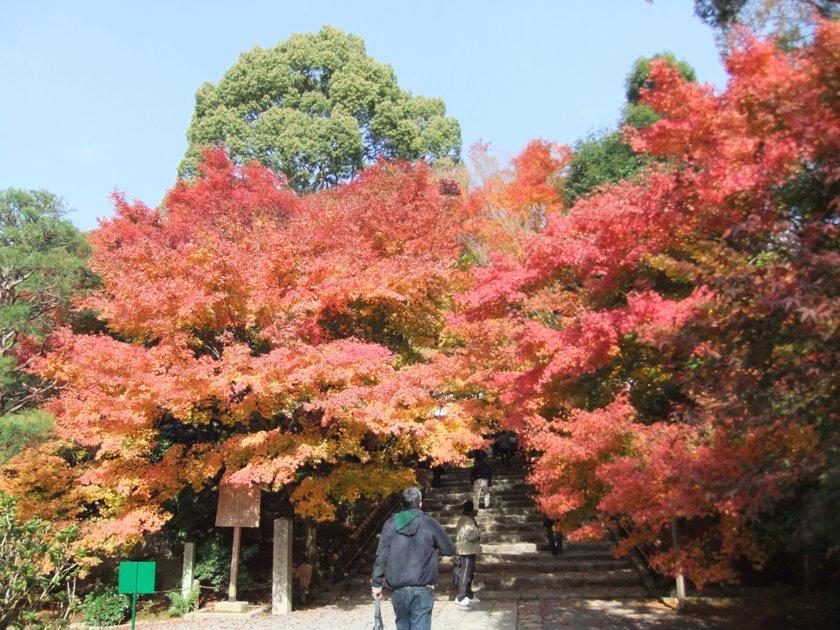 kyoto-2010-11_13.jpg