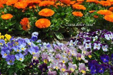 fiori_convert_20100505223956[1] (2)