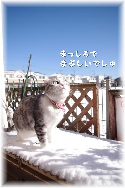 雪がまぶしいでしゅ