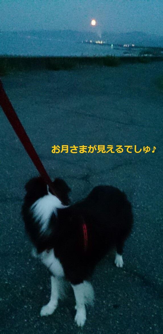 IMG_20130821_055408.jpg