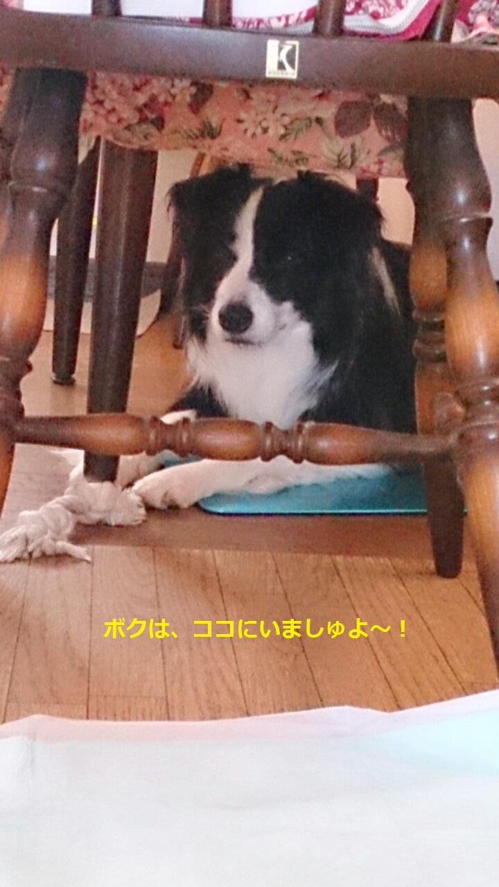 IMG_20130830_202312.jpg