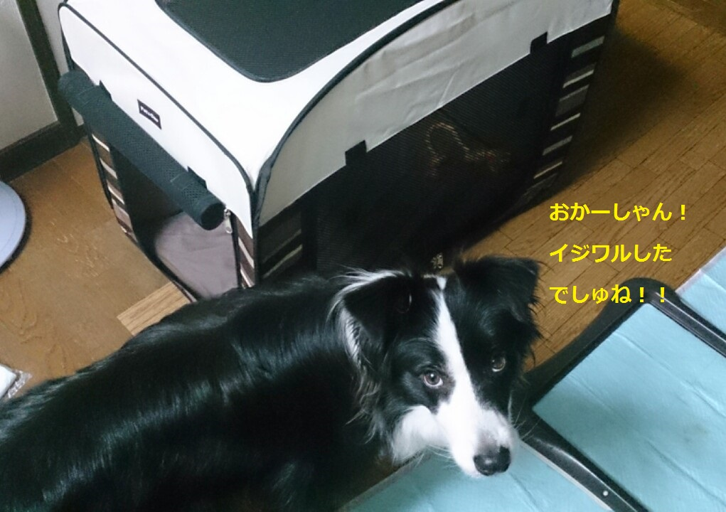 IMG_20131017_193848.jpg