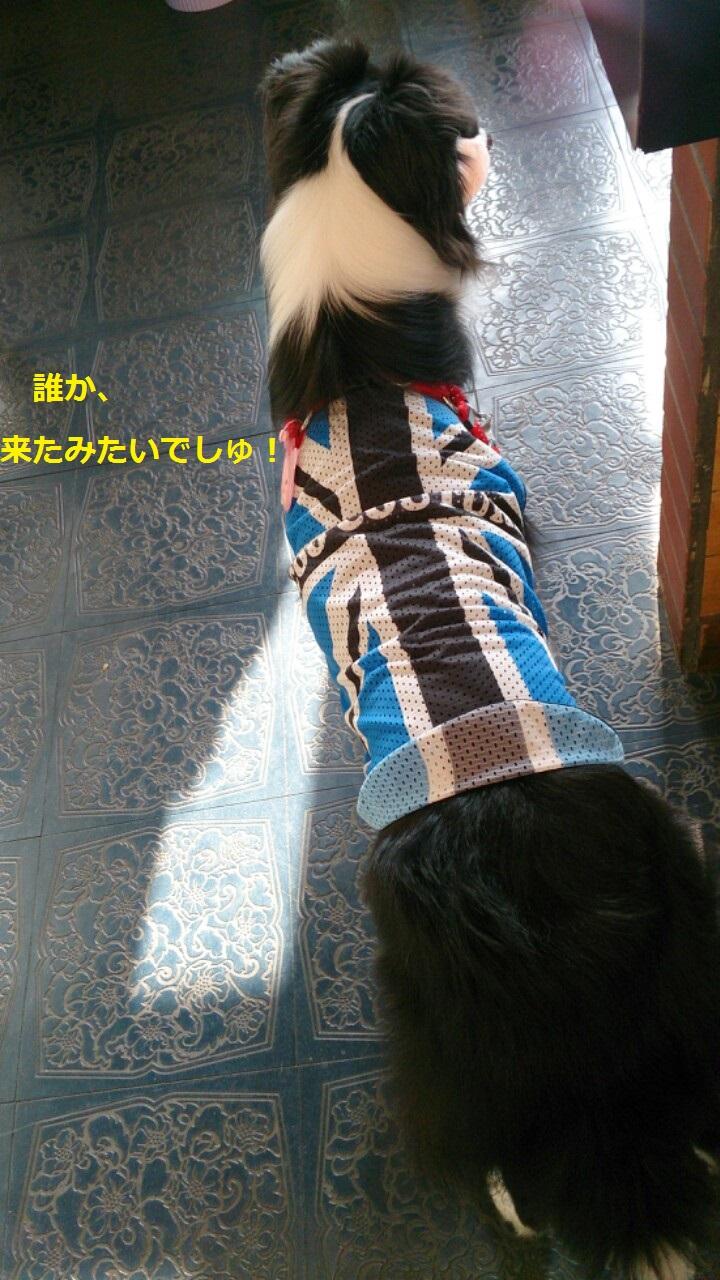 IMG_20131028_193601.jpg