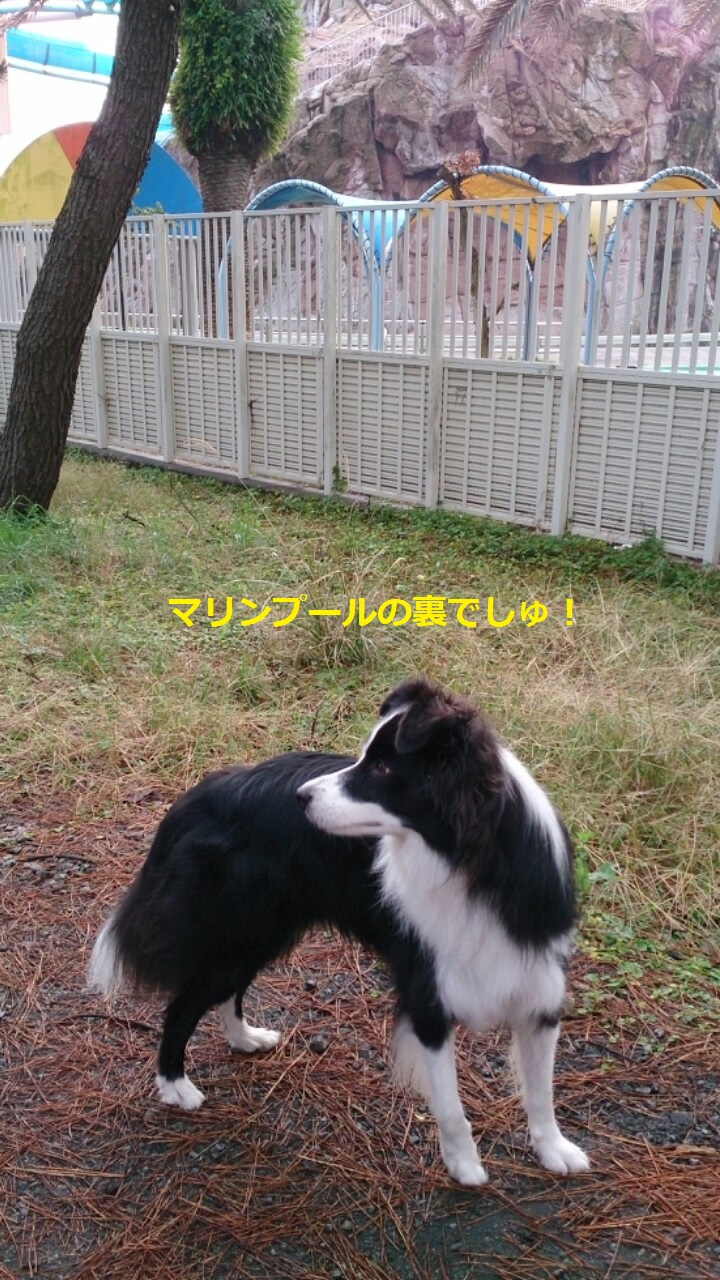 IMG_20131110_201141.jpg