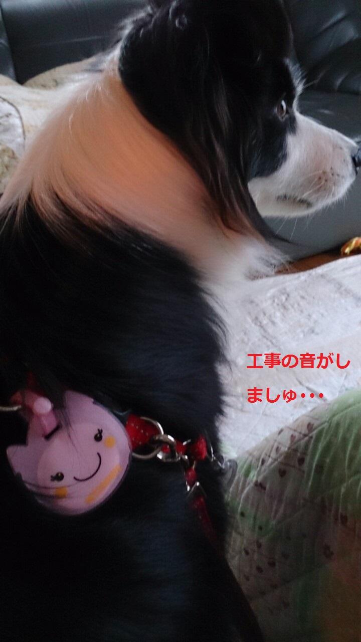IMG_20131112_204532.jpg