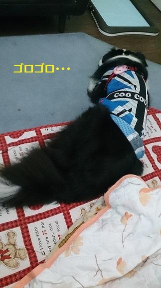 s-DSC_1180.jpg