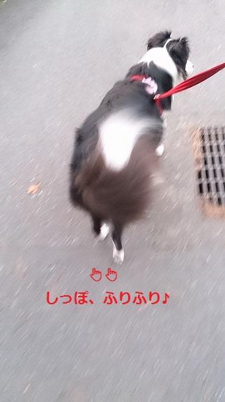 s-DSC_1220.jpg