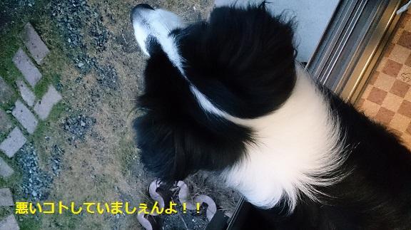 s-DSC_1291.jpg