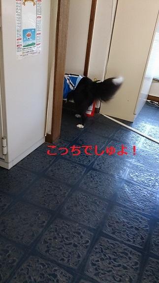 s-DSC_2410.jpg