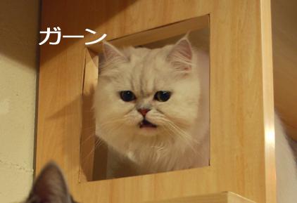 0116 (14) - コピーのコピー