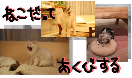6 - コピー - コピー - コピー