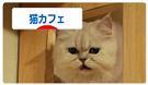 koko_20100121120802.jpg