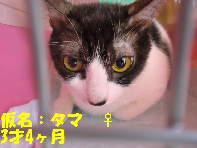20080101生まれタマ♀