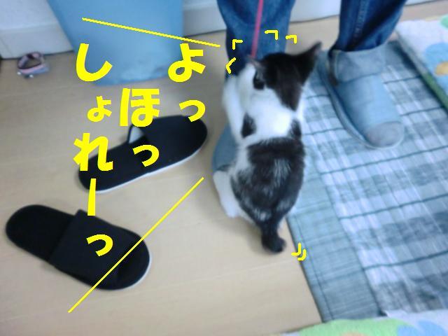 20110524-3.jpg