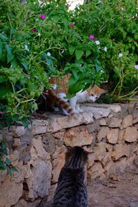 何度目かの猫トラップ