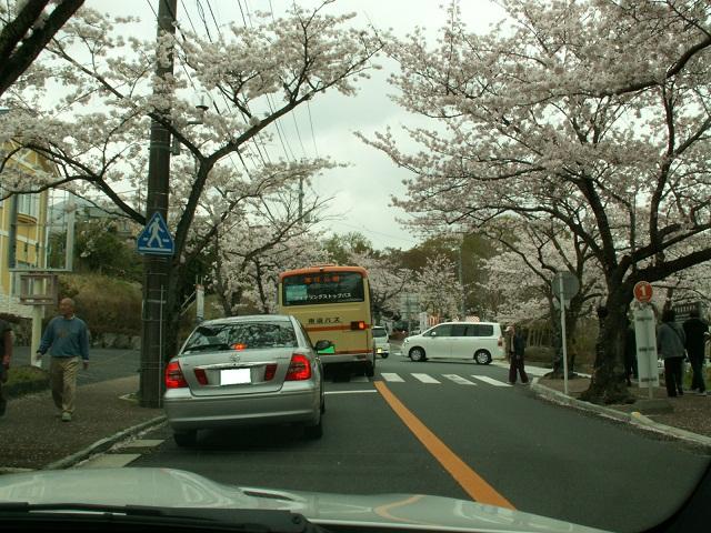 桜並木入り口