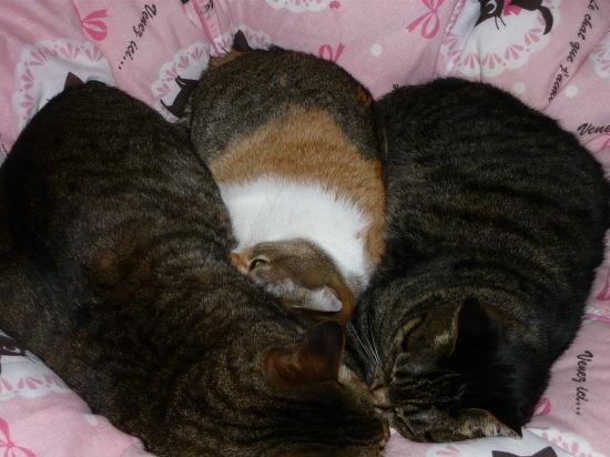 我が家の猫3匹が川の字?