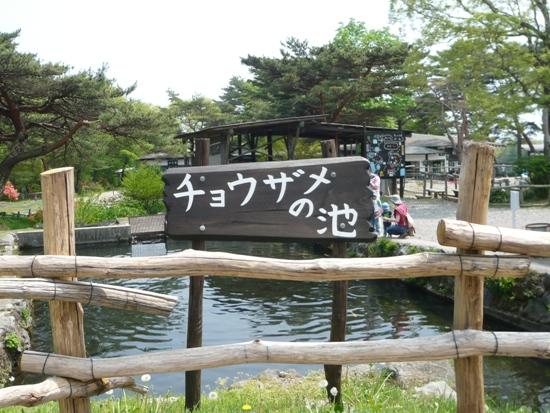 チョウサメ池